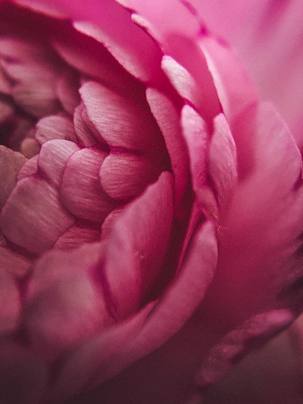 Yd flowers